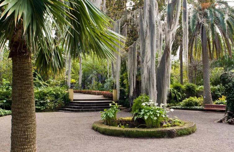 Остров Тенерифе Ботанический сад