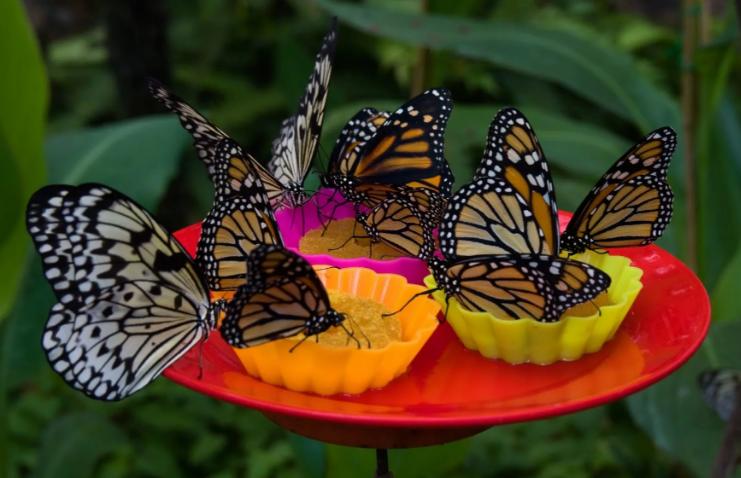 Остров Тенерифе Музей бабочек