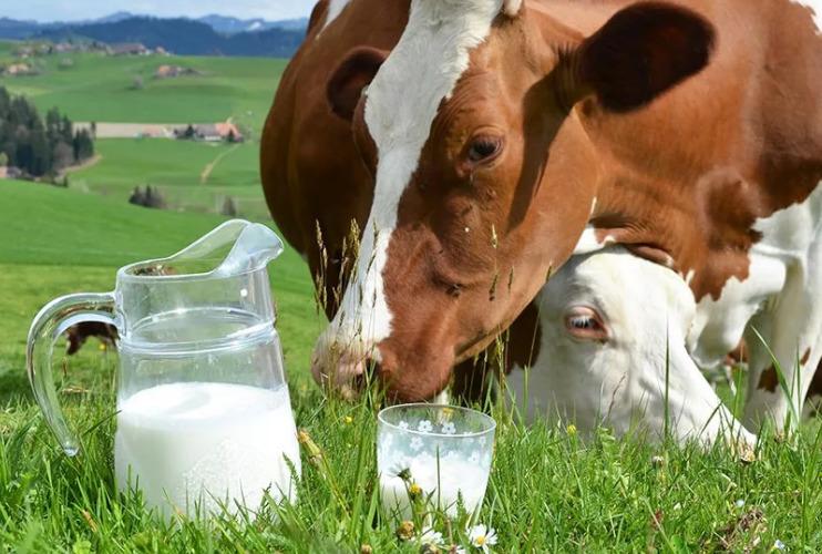 коровье молоко для укрепления зубов и десен
