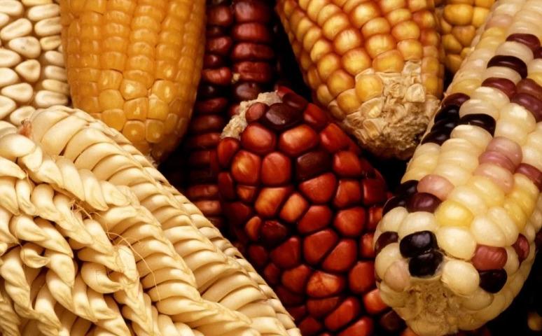 Что такое ГМО и с чем его едят