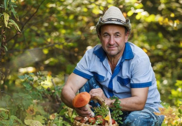 Как правильно собирать грибы советы