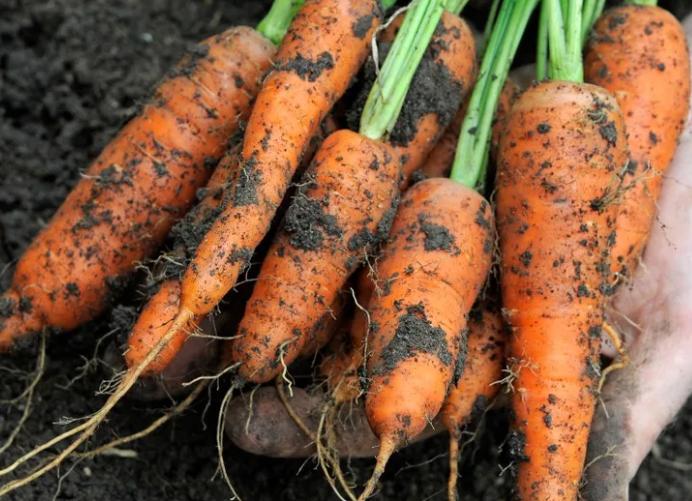 Морковь очищает легкие курильщика