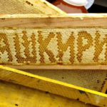 Мед Башкортостана полезные и целебные свойства
