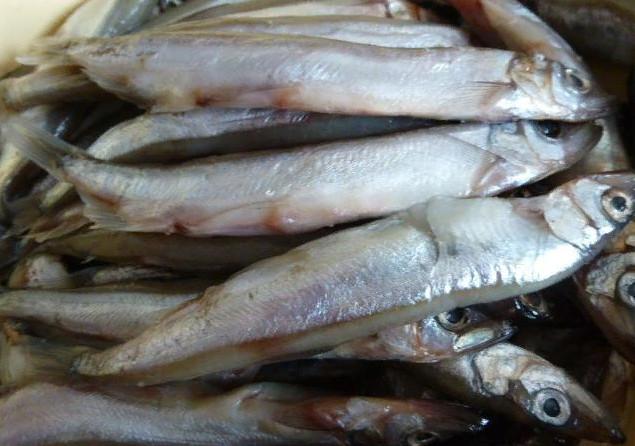 Такая полезная морская рыба