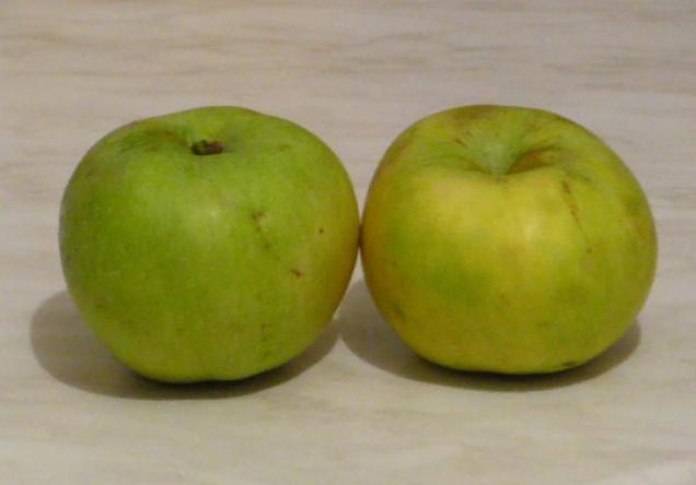 Яблоки польза