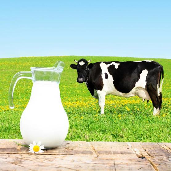Витамин А в коровьем молоке